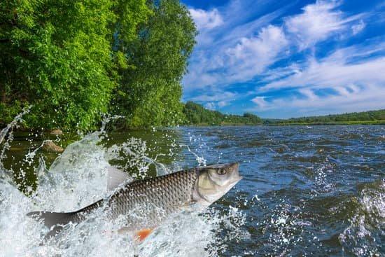 Best Kokanee Fishing Rods